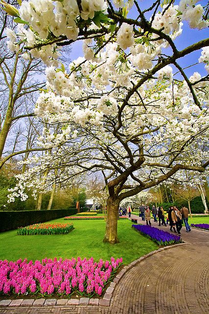 Keukenhof - White tree