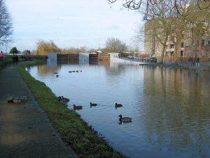 Roermond - ducks