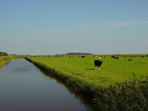 Texel - Polder
