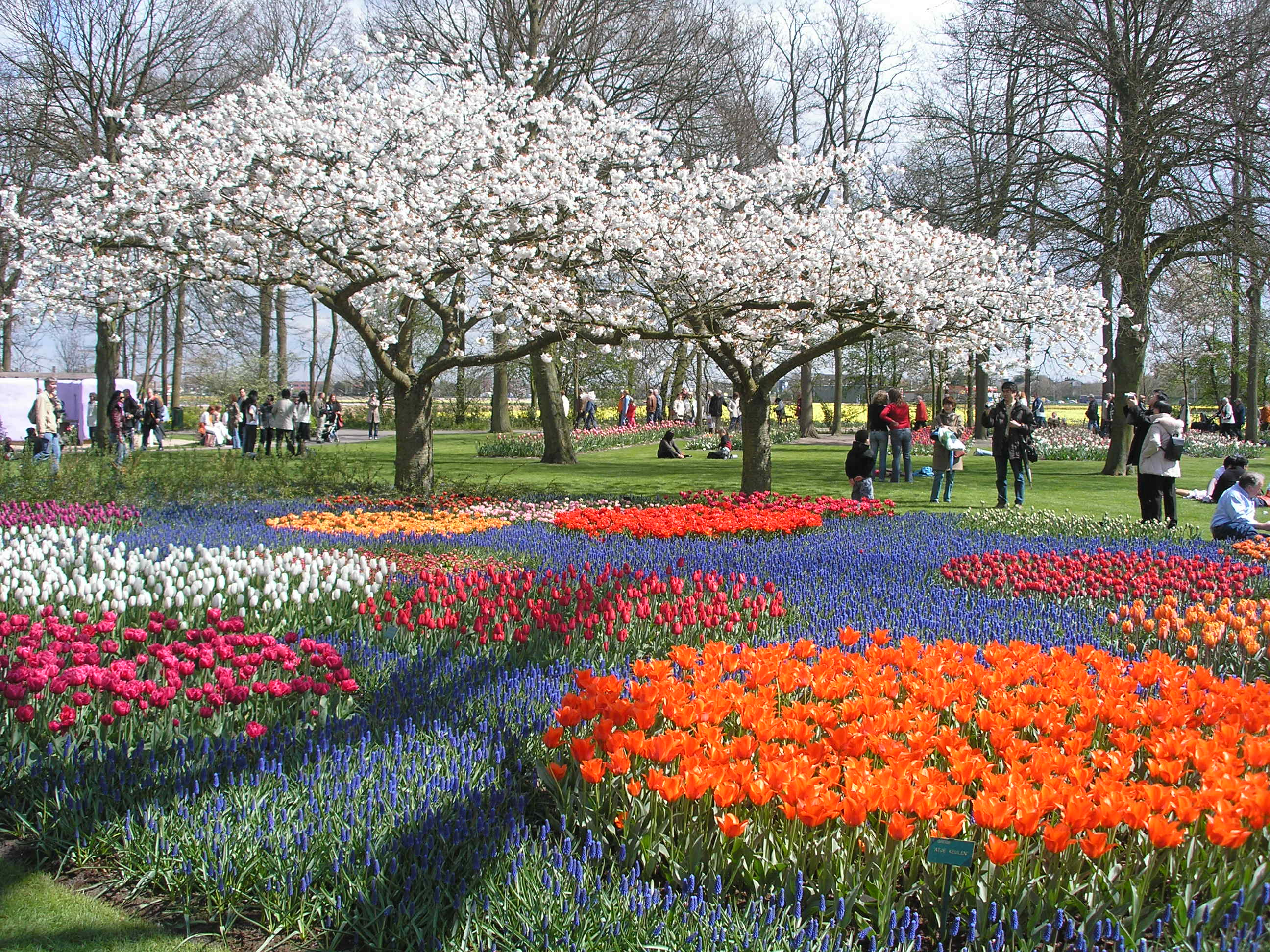 14 reasons to visit the netherlands in spring for Jardines de keukenhof