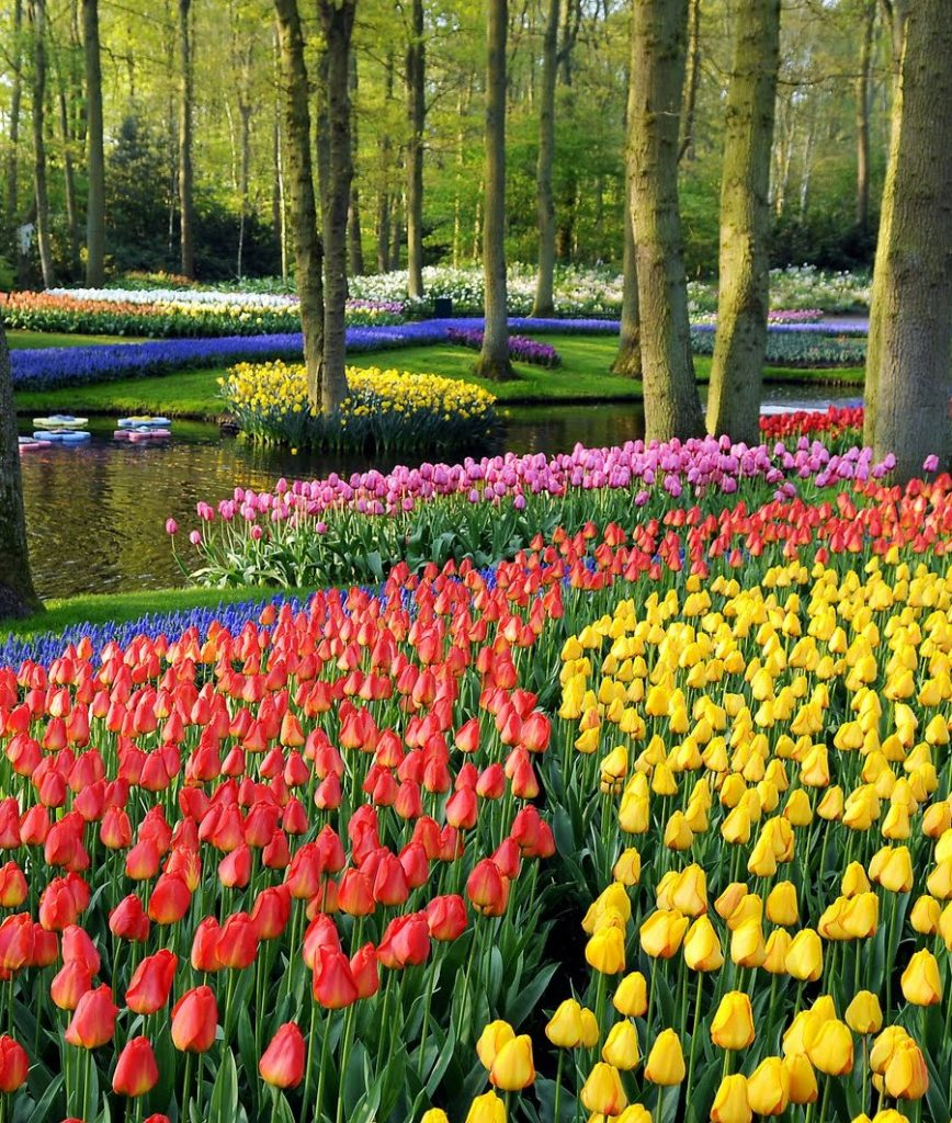 Spring Pictures: 14 Reasons To Visit The Netherlands In Spring