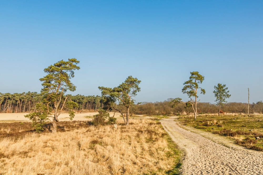 De Loonse en Drunense Duinen National Park